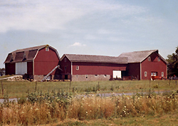 Barns at 'Home Farm' in 1964